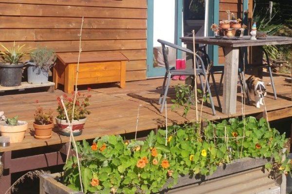 Nasturtium – a true wonder plant!